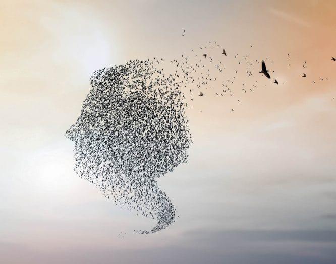Alzheimer: Illustration eines Frauenkopfs mit Vögeln