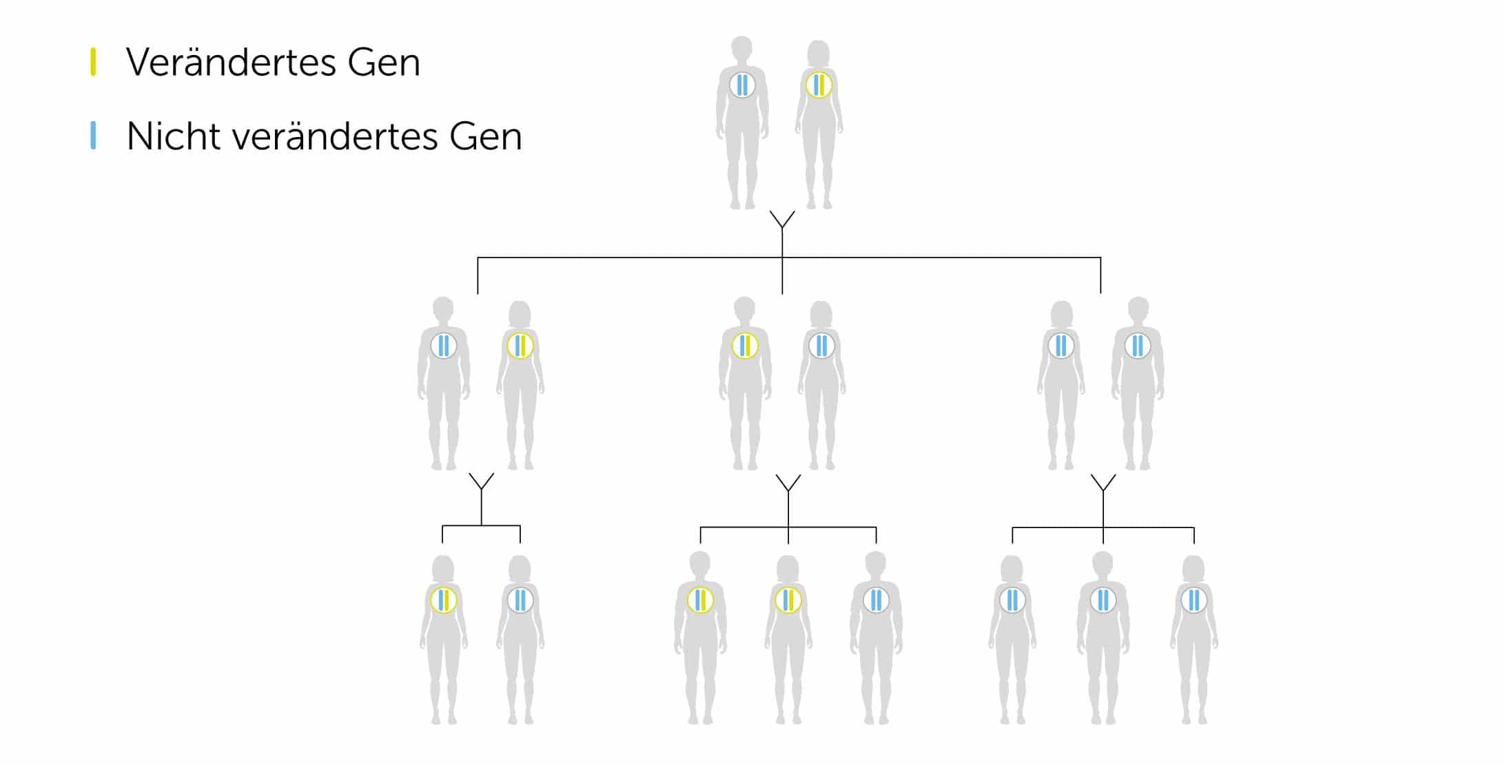 Vererbung der für Brustkrebs verantwortlichen BRCA1/2 Mutation im Stammbaum