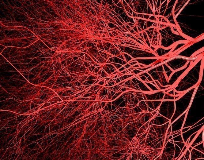Illustration von Blutgefässen