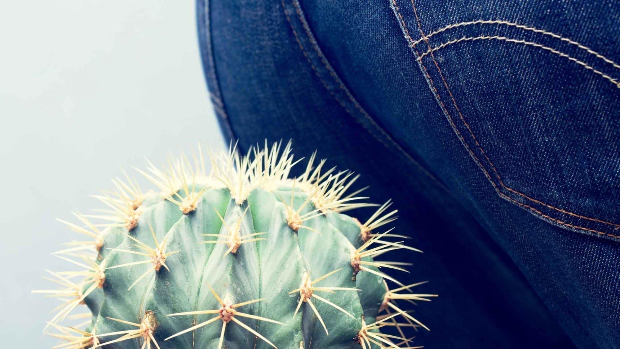 Eine Person setzt sich auf einen Kaktus