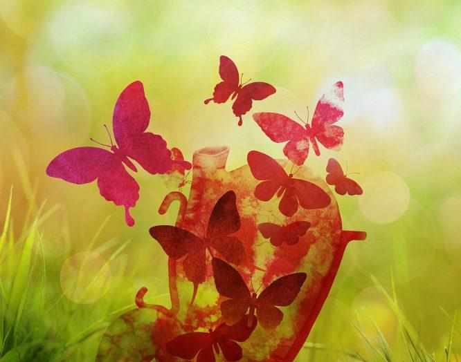 Ein Herz und Schmetterlinge