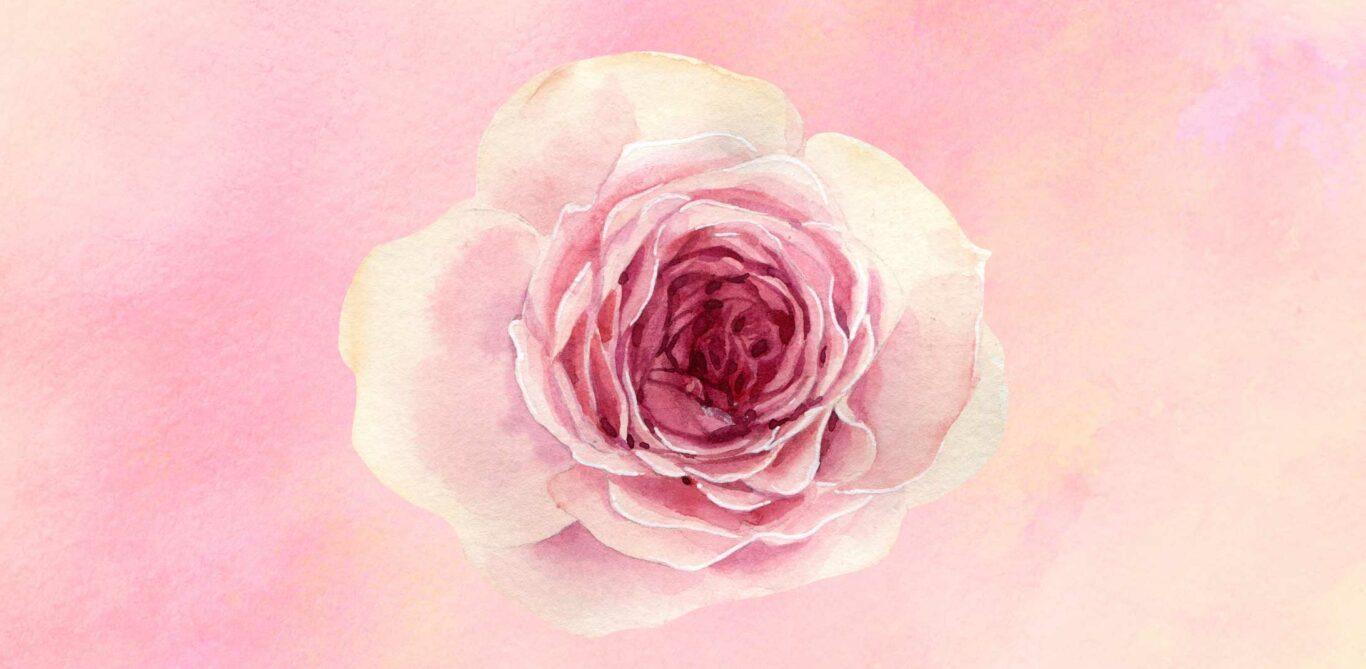 Das Bild zeigt eine gemalte, rosafarbene Rose. Beim Hypnobirthing soll man sich den Geburtsvorgang als eine sich öffnende Blume vorstellen.