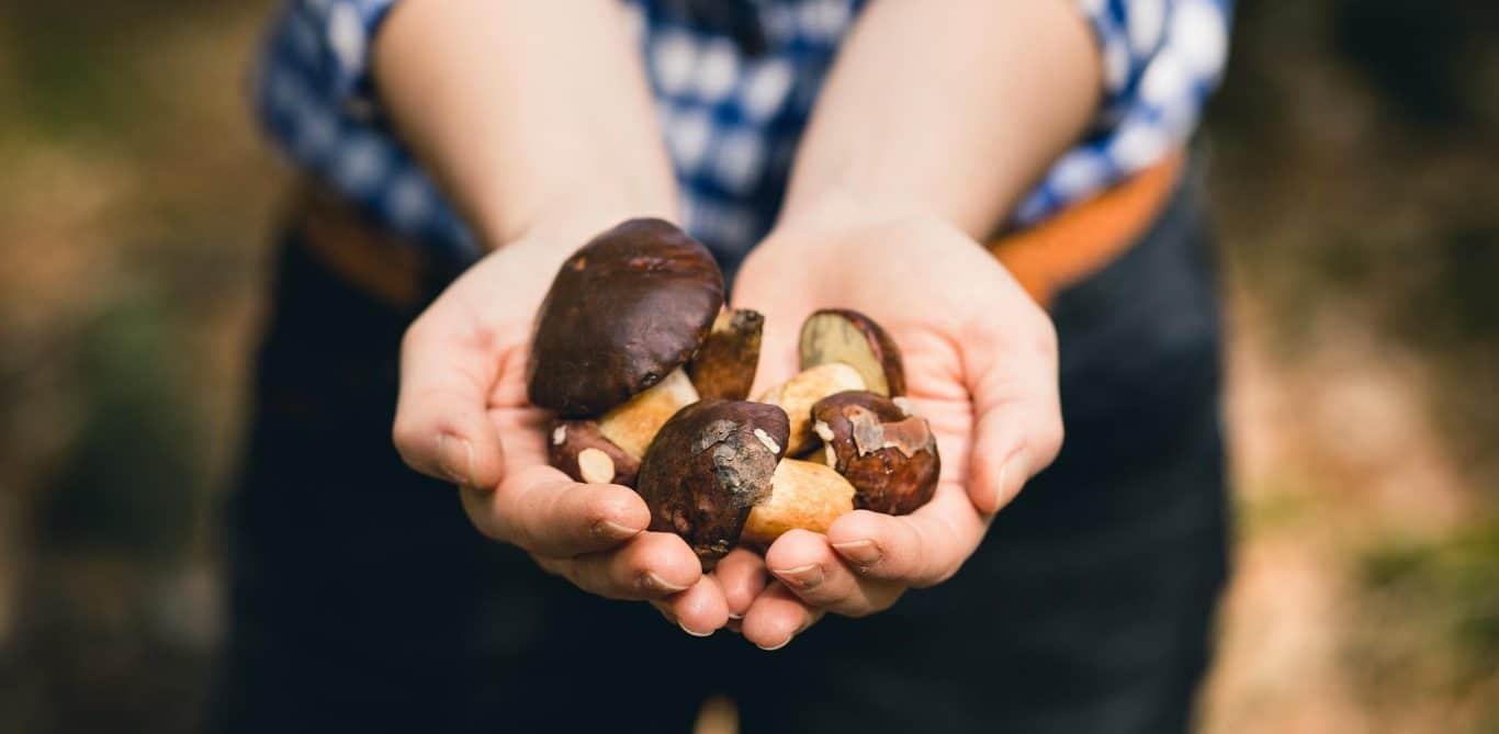 Eine Frau hält in ihren Händen verschiedene Pilze.