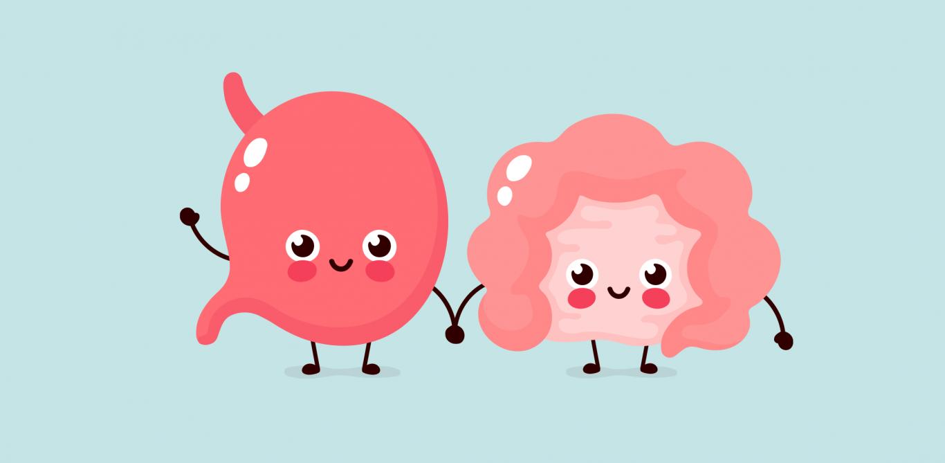 Illustration von Magen und Darm, den Organen für die Verdauung