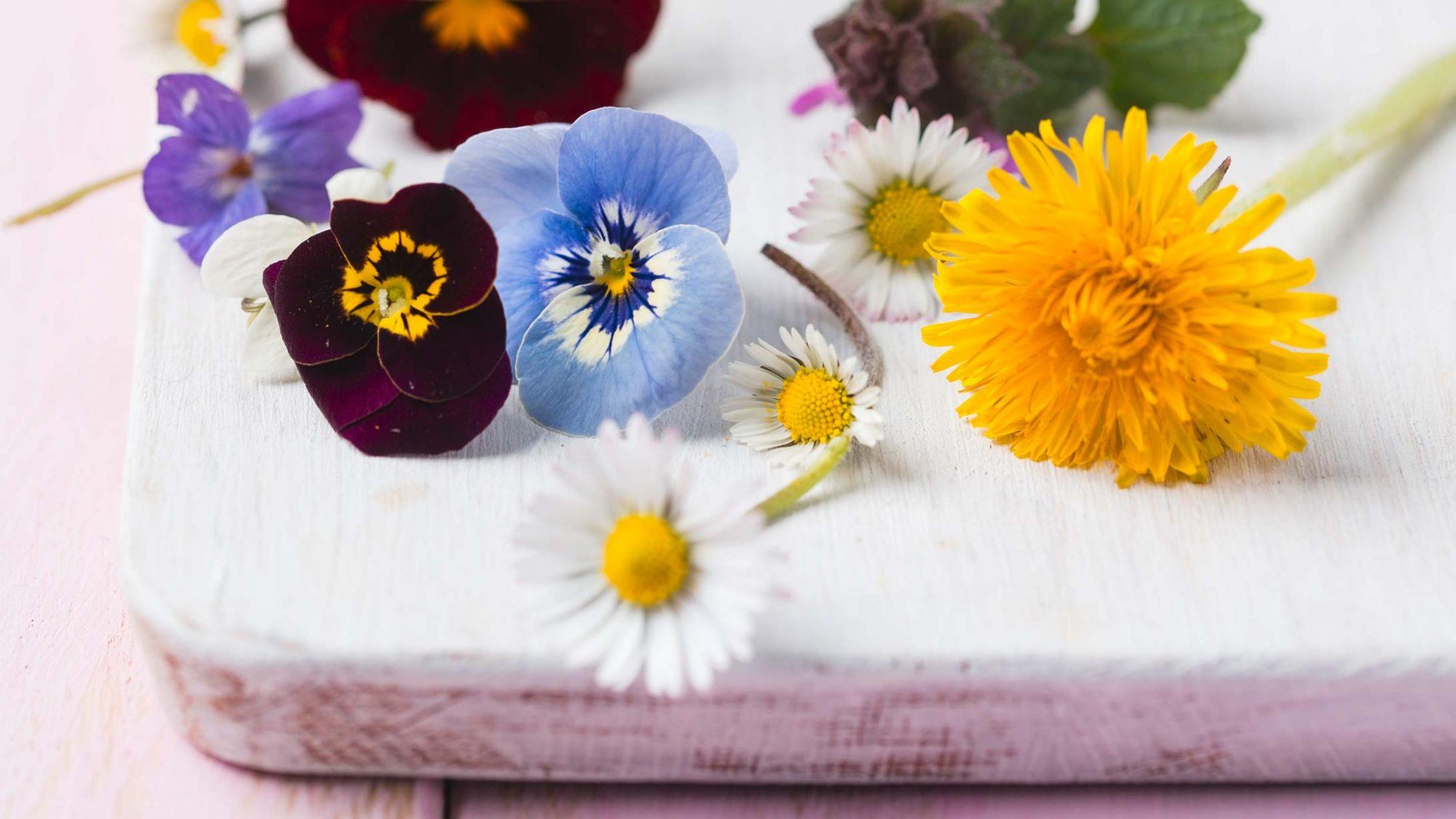 Osterrezept mit Spargel: Bild von essbaren Wildblüten