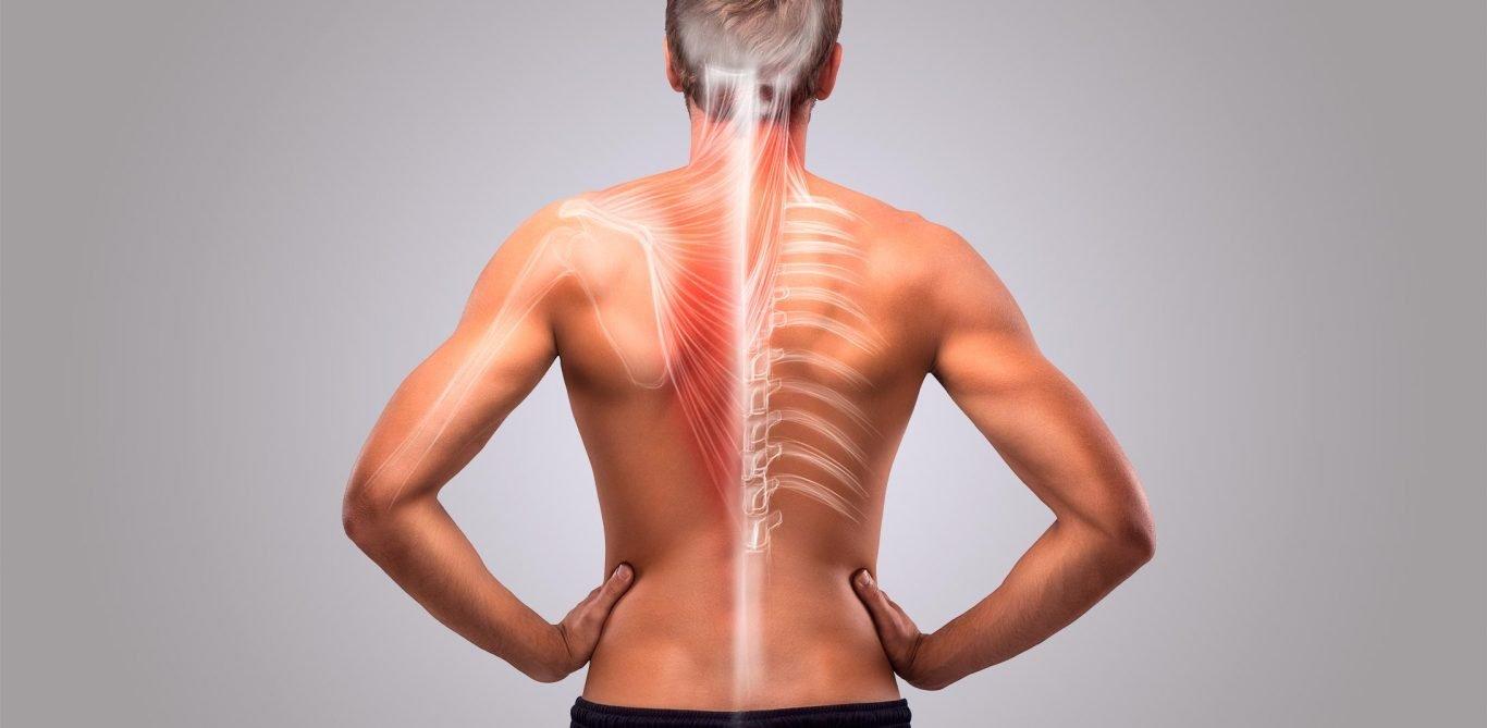 Orthopädie, das sind Knochen und Muskeln