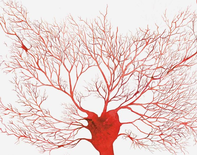rote, verästelte Gefässe